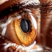Occhi e Orecchie